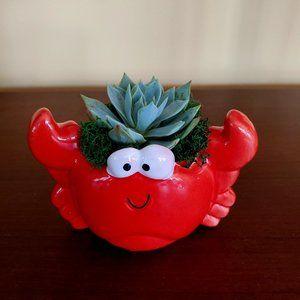 Animal Planter - Red Crab with Succulent, ceramic